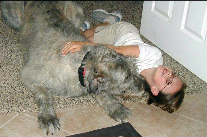 Irish Wolfhound Temperament Sweet Tempered Gentle Giants Photo | Dog ...