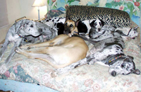 dogs on bed napping
