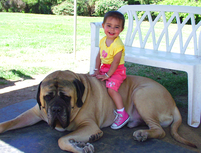 gentle giants rescue and adoptions