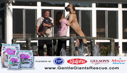 stores carrying Gentle Giants dog food